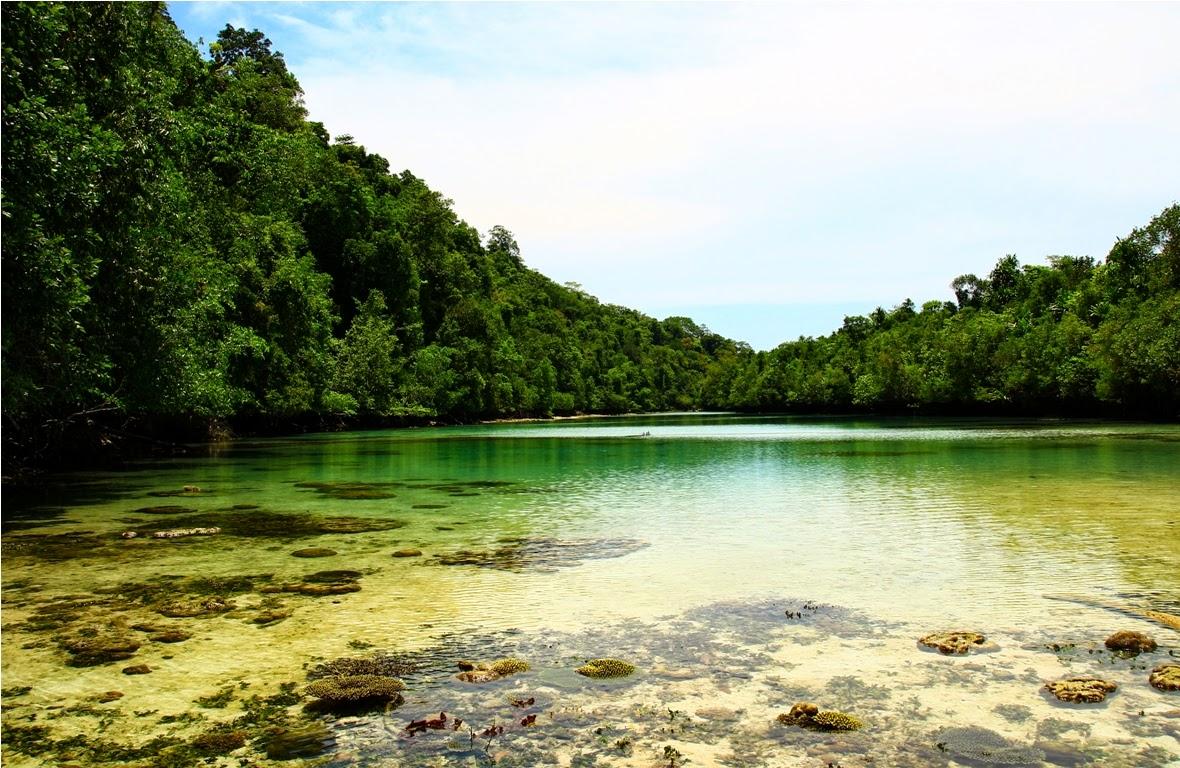 Air yang surut memperlihatkan terumbu karang hidup yang membedakan Laguna Tersembunyi Kakaban (Hidden Lagoon) dengan Danau Ubur-Ubur Kakaban