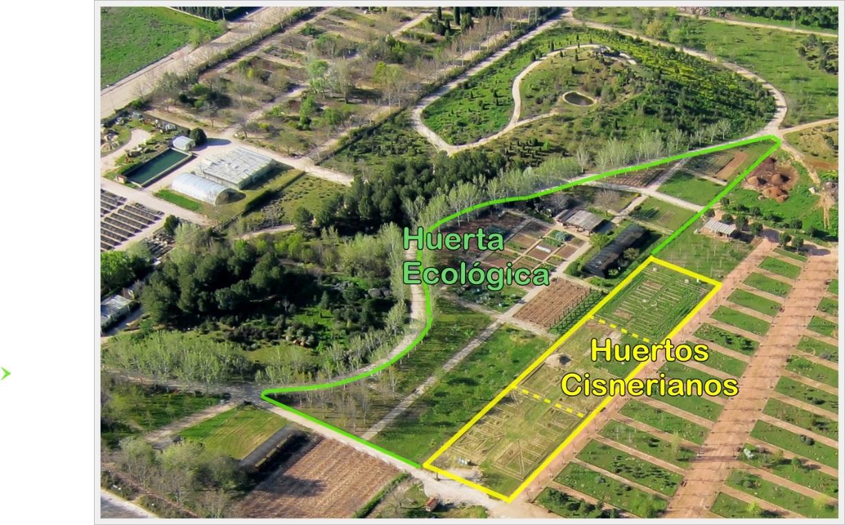 Huertos cisnerianos presentaci n del proyecto huertos for Jardin botanico ucm