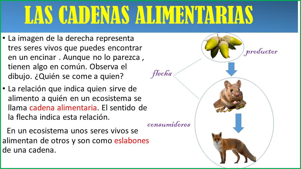 Lujoso Cadena Alimentaria Y La Cadena Trófica Hojas De Trabajo De ...