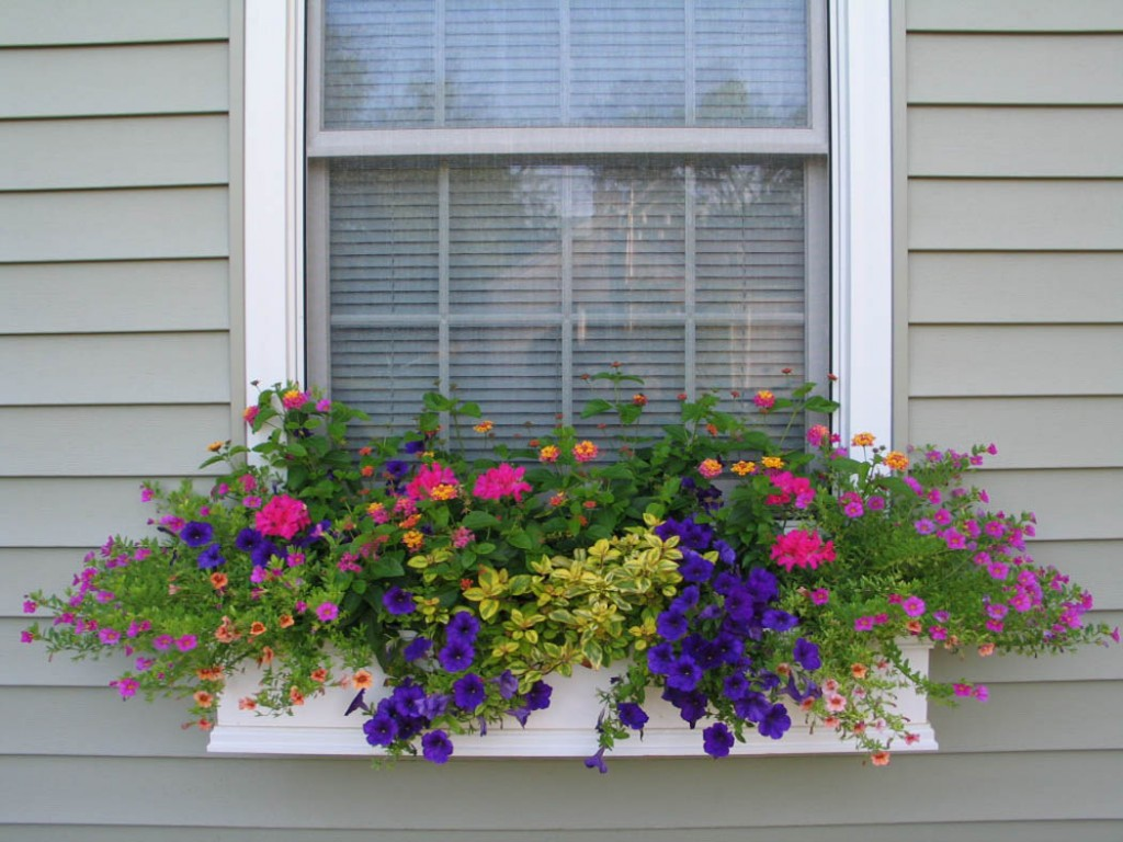 A Vintage Junket: Window Boxes