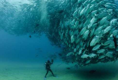 Menakjubkan! Penyelam Ini Terjebak Tornado Jutaan Ikan Laut