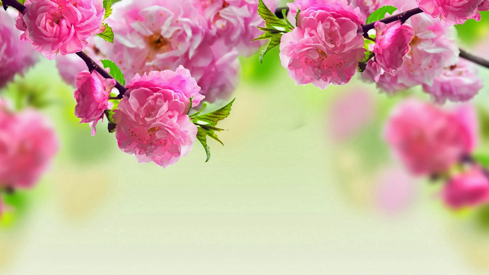HD wallpapers 1080p widescreen Flowers | Nice Pics Gallery