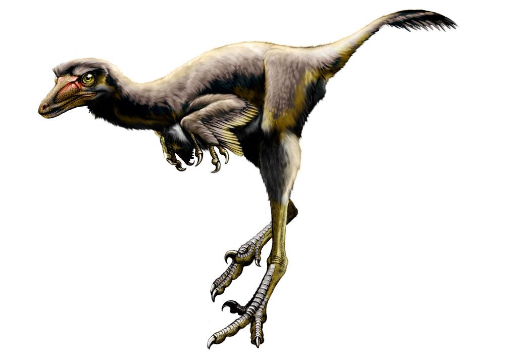 Raptori Dinosaurus