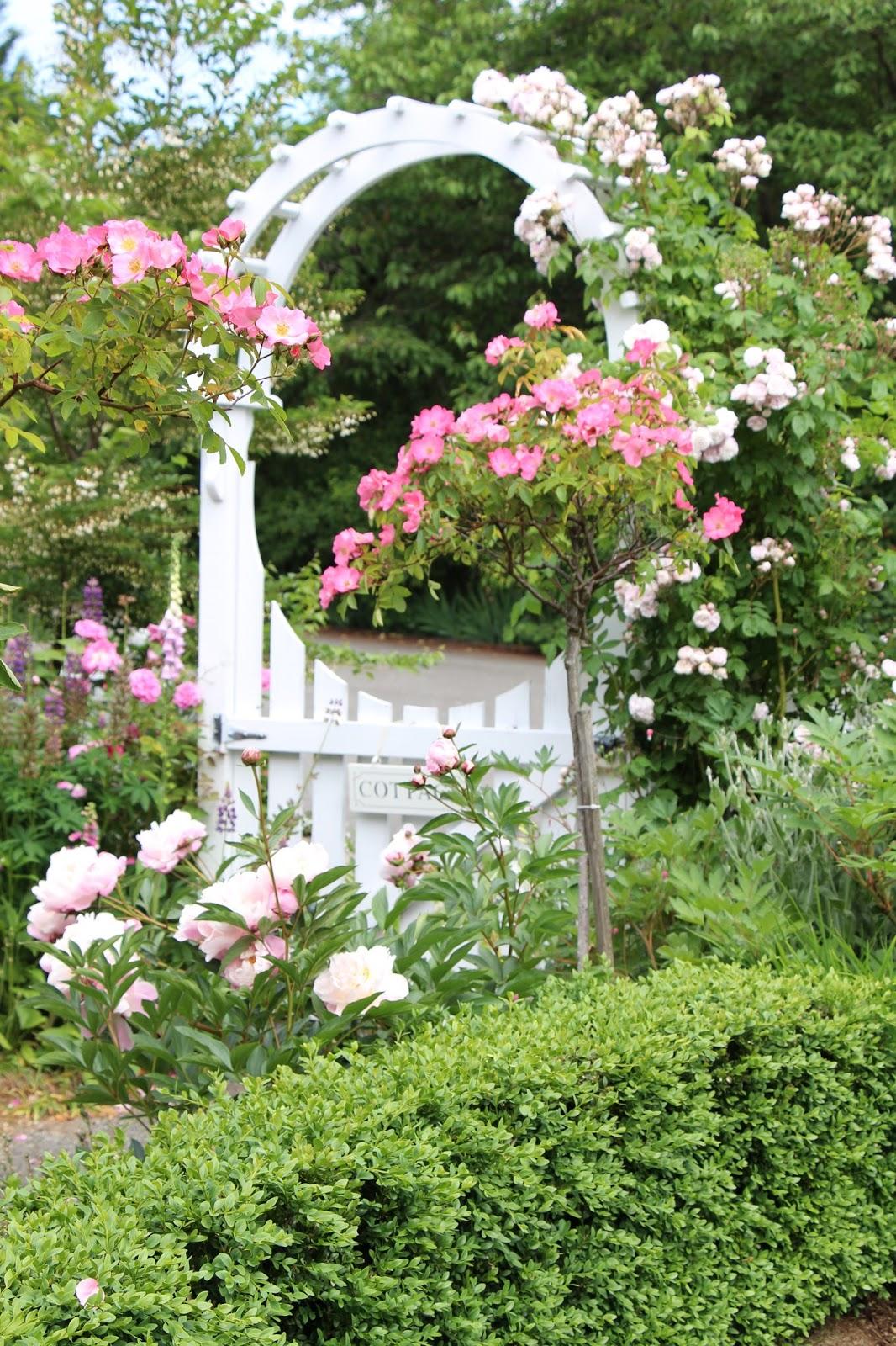Cottage Gardens: Fishtail Cottage: Fishtail Cottage Garden 5/25/15