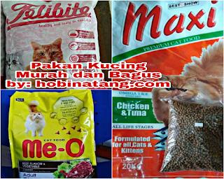 Merk Makanan Kucing yang Bagus dan Murah