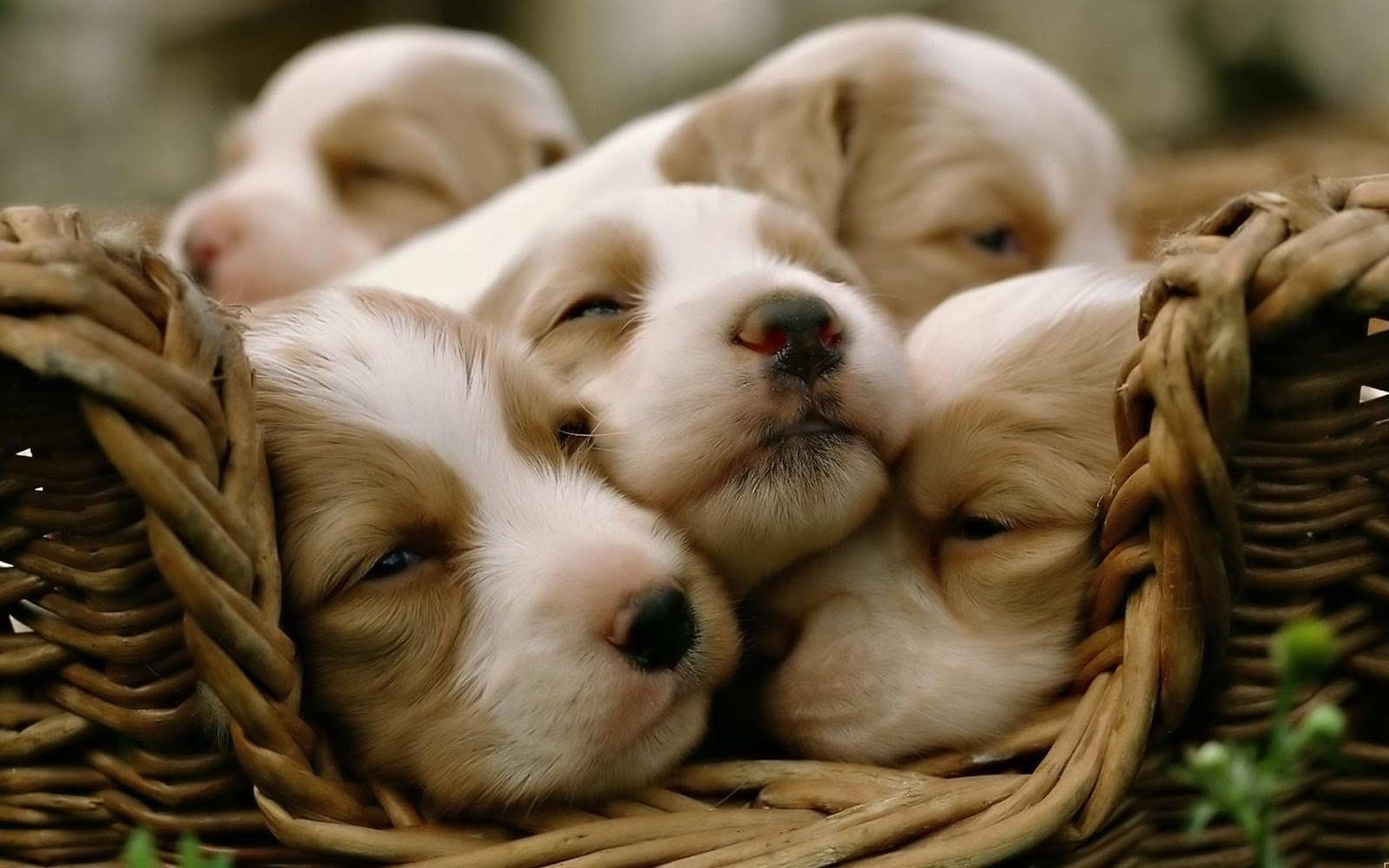 Activating Thoughts Cute Puppies