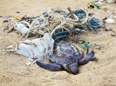 turtle sea life stuck in plastic trash
