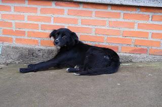 Black dog on sidewalk in Puriscal.
