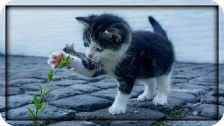 this image shows a pet cat playing with a flower