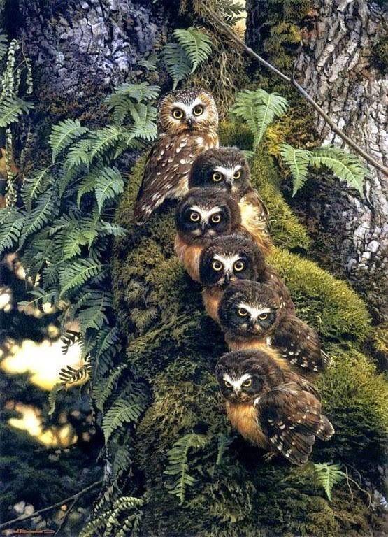 whet owl family