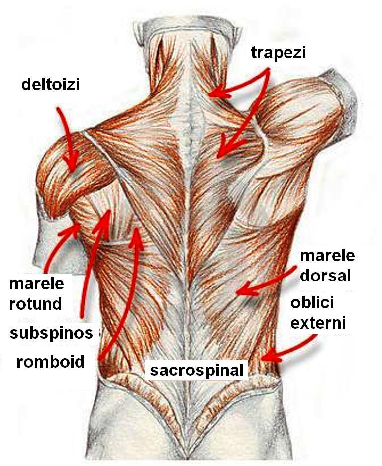 tratamentul medicamentos al durerii în articulația umărului dacă articulația de pe degetul mare doare