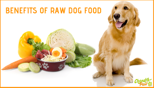 Raw dog food | What is Raw dog food | Benefits of Raw dog food