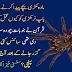 Mada Makri Bachay Peda Karnay K Bad Nar Kayon Mar deti Hia.