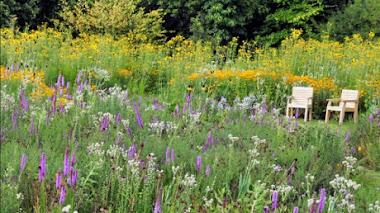 Sowing Beauty. Diseñado praderas de flores a partir de semillas.