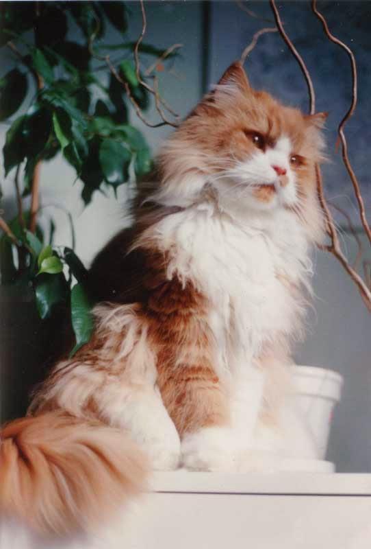 مجموعه مختلفه من صور القطط الجميله بجوده عاليه