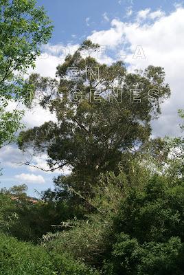 Árboles en Sopelana (Sopela)