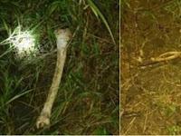 Ossada humana é encontrada enterrada em plantação