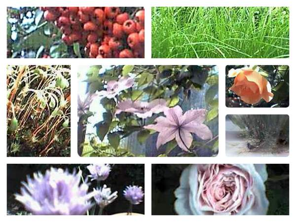 Gartenbilder-Collage