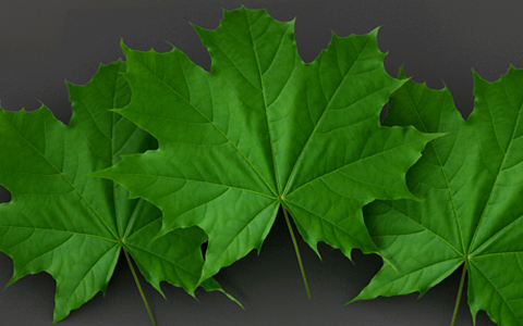 creating leaf in 3ds max