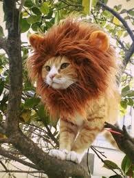 написать Тигр
