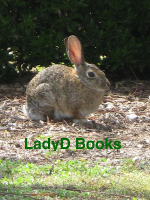 Bunny: LadyD Books