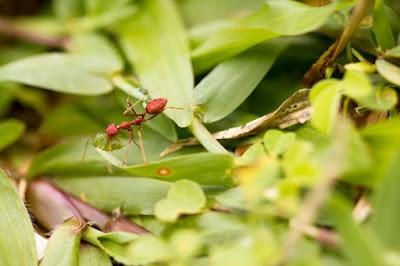Tips Tukang Taman surabaya Cara Membasmi Semut