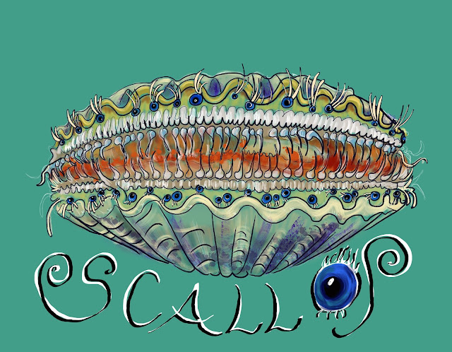 In the Eyes of the Scallop
