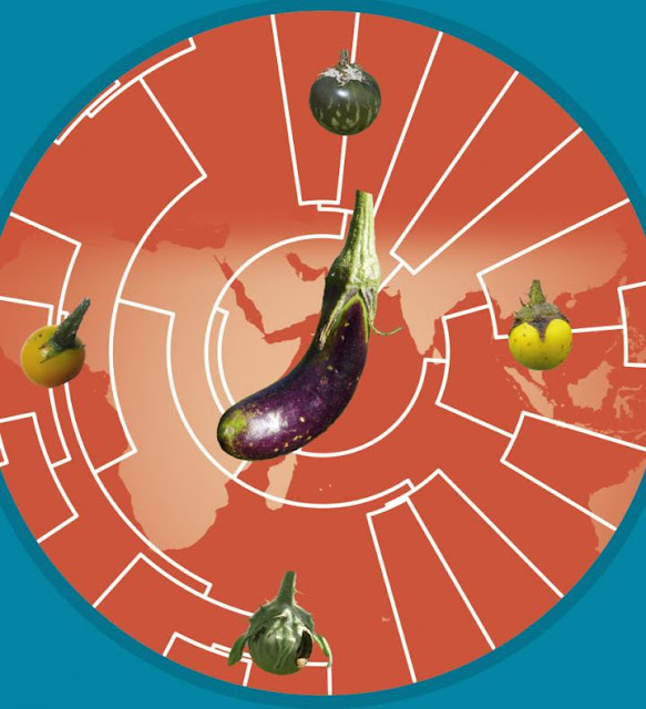 How eggplants became Asian: genomes and elephants tell the story