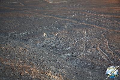 El árbol de Nazca