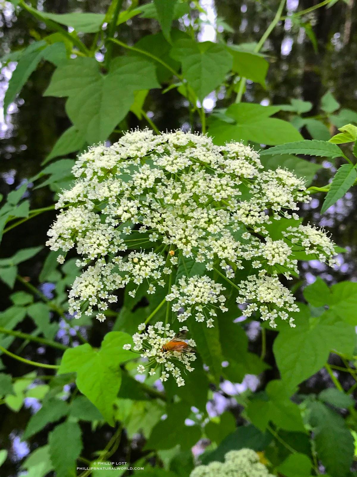 Floridas Most Poisonous Flower Phillips Natural World