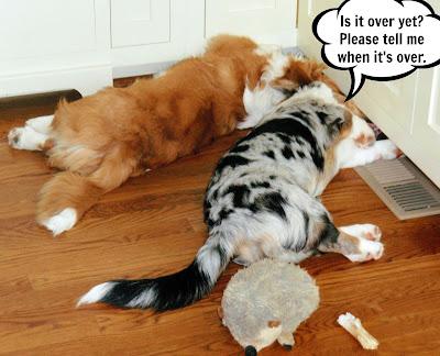 Under Cabinet Dog Food