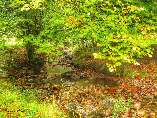 Otoño en la Selva de Irati