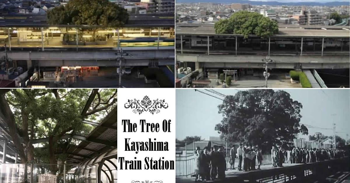 A 700 Year Old Tree Inside a Japanese Train Station
