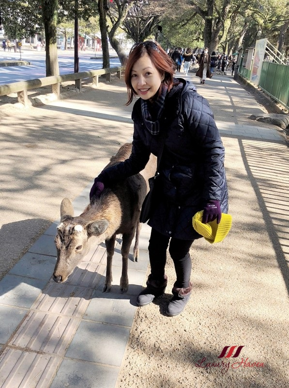 osaka nara park free roaming deer national treasure