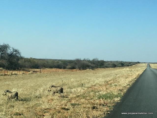 consejos sobre carreteras y conducir en Namibia