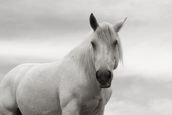 beautiful white horse majestic by lucy snowe