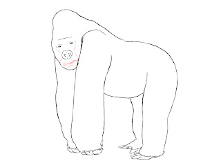 How To Draw A Gorilla - Draw Central