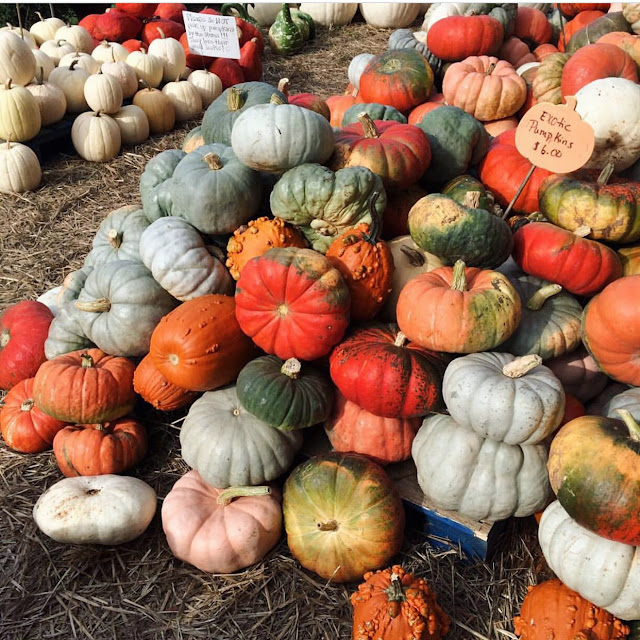 Exotic pumpkins, Charlotte, NC
