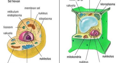 Ilmu yang mempelajari tentang hewan 2. TEORI SEL | Biologi Sel