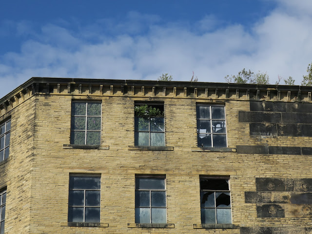 Pellon Lane Mill with buddleia and willow-herb on roof.