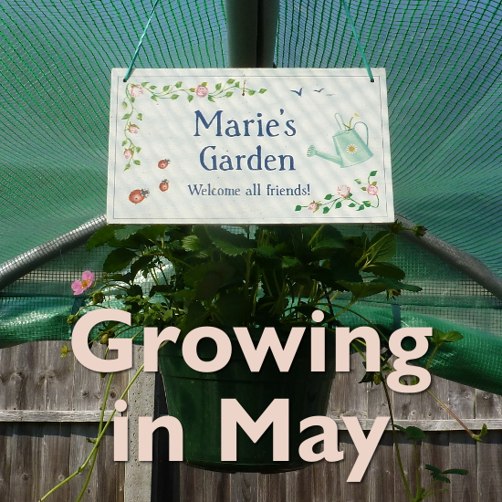 growing in may