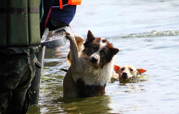 Cão segurado num carro para se salvar das cheias