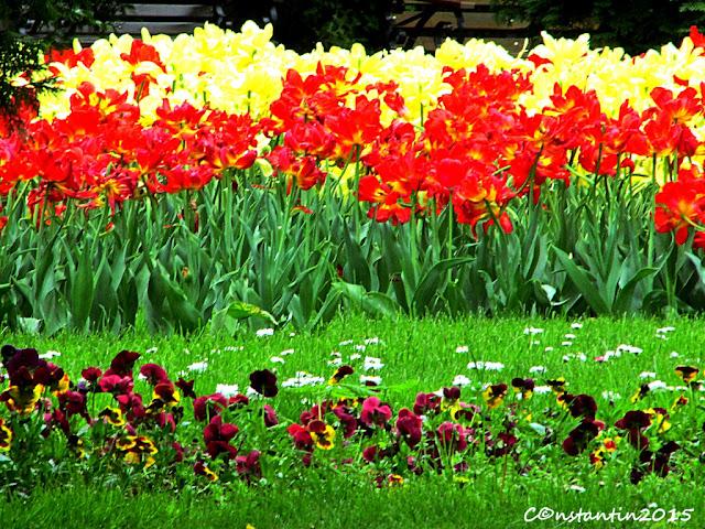 Umple cadrul cu flori - blog Foto-Ideea