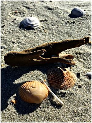 Flotsam on the beach