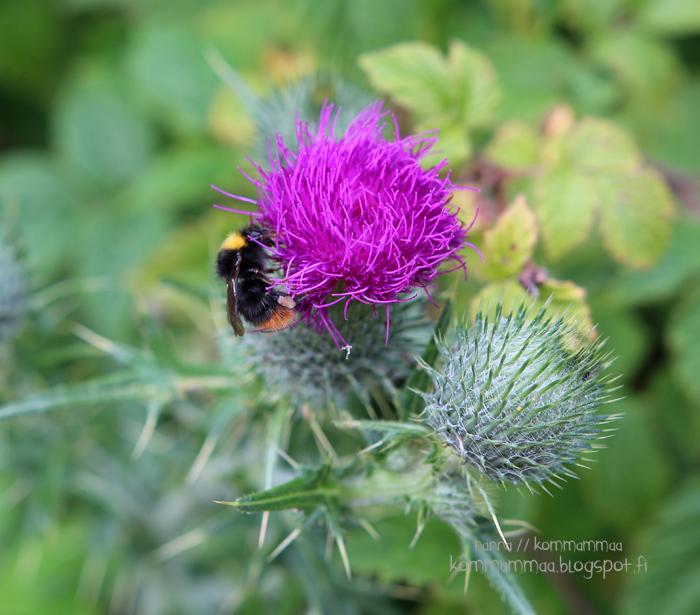 mehiläinen kukka