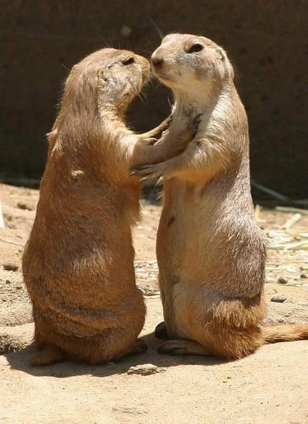Animals In Love Amazing Creatures