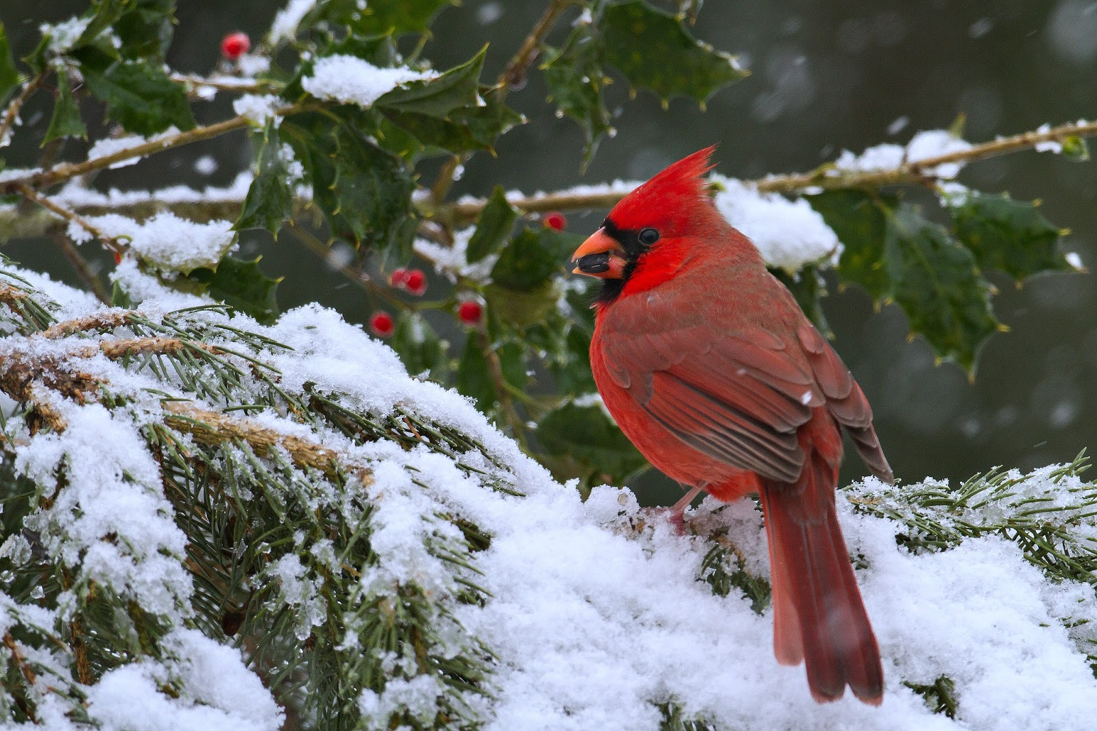 Relevancy22 contemporary christianity post evangelic - Pictures of cardinals in snow ...
