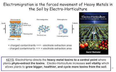 Electromigration is the forced movement of Heavy Metals in the Soil by Electro-Horticulture