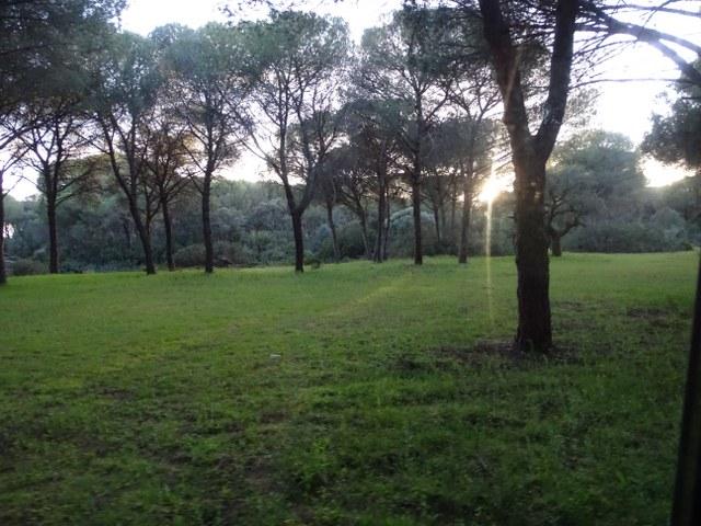 Doñana atardecer pinar el Coto