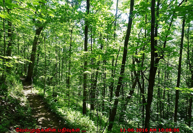 Appalachian Trail - Woody Gap to Jarrard Gap